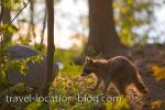 photo of Rocky Raccoon Returns Killarney Provincial Park Ontario