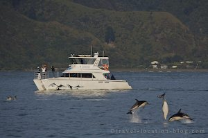 photo of A Day With Marine Mammals In Kaikoura