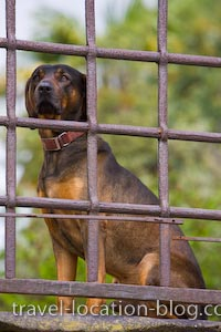 photo of Watch Dog Lucca Tuscany Italy