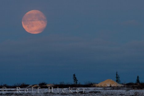 photo of Full Moon Churchill Manitoba Canada