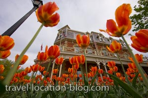 photo of Tulips Galore In Niagara On The Lake Ontario Canada