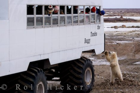 photo of Tundra Buggy Adventure Churchill Manitoba