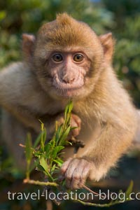 photo of Monkeying Around On The Rock Of Gibraltar