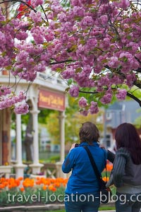 photo of Spring In Niagara On The Lake Ontario Canada