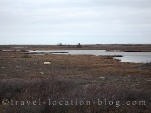 photo of Sleeping Polar Bears Hudson Bay Canada