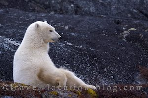 photo of Self Driven Polar Bear Tour From Churchill Manitoba